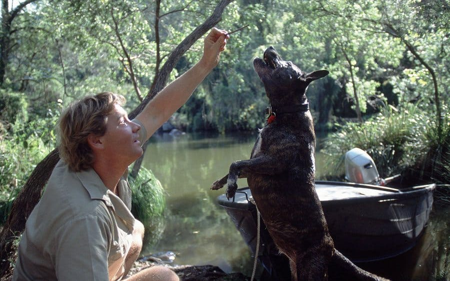 Steve Irwin with a dog jumping in the film 'The Crocodile Hunter: Collision Course'