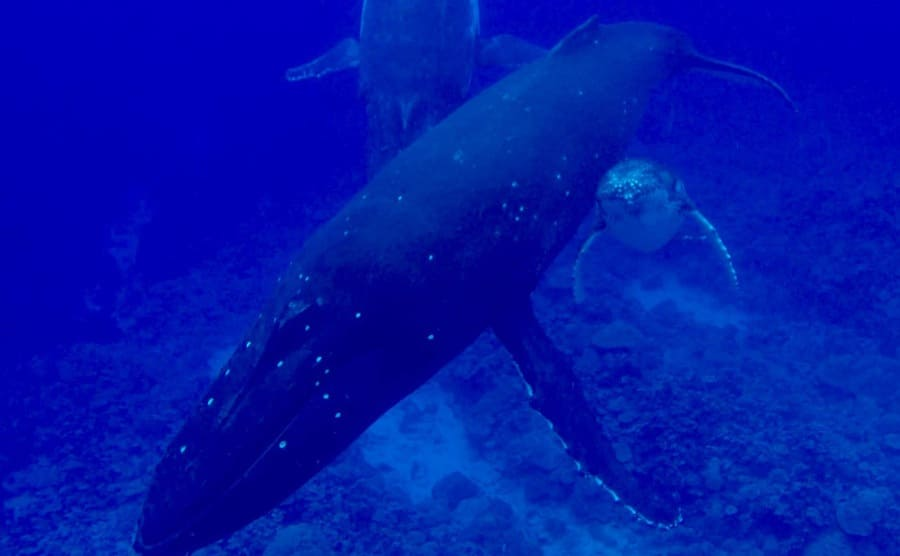 A few whales towards the bottom of the ocean