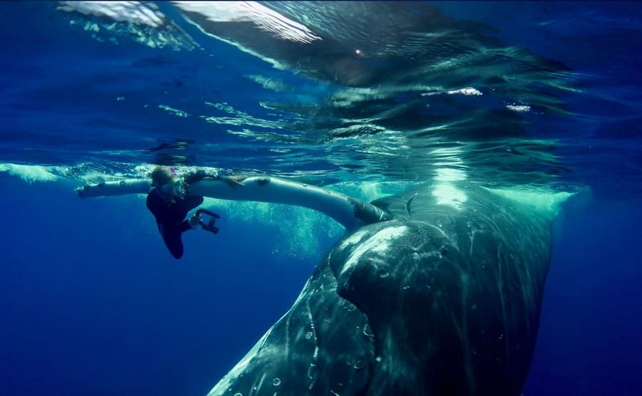 Nan underneath the fin of a humpback whale