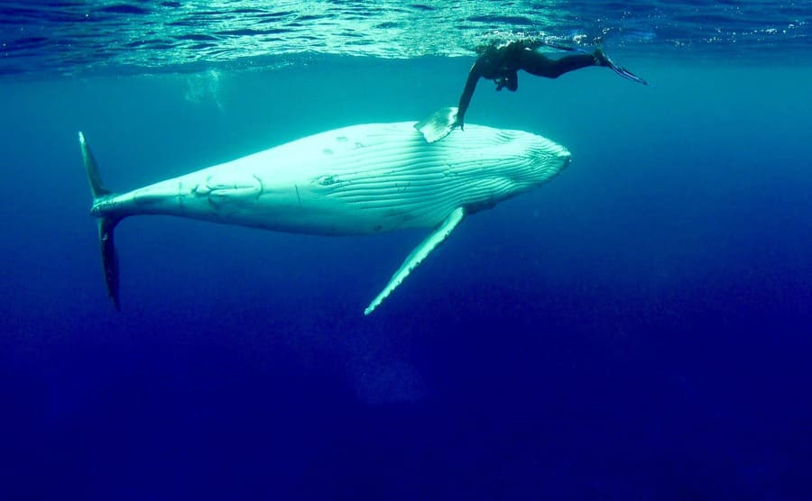 Nan holding the fin of a humpback whale