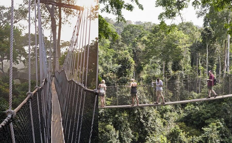 A view of the thin walking path along canopy walkway / People walking across the canopy walkway