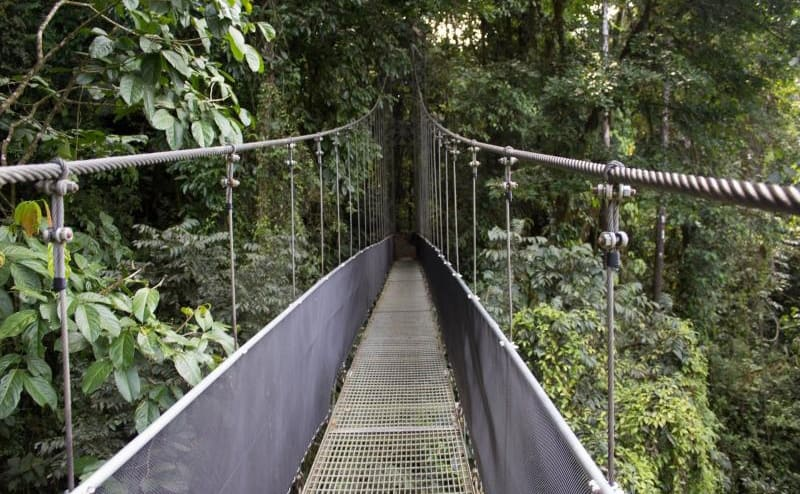 A bridge over the tall trees in Costa Rica
