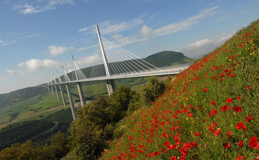 The Millau Viaduct behind a mountainside covered with red flowers