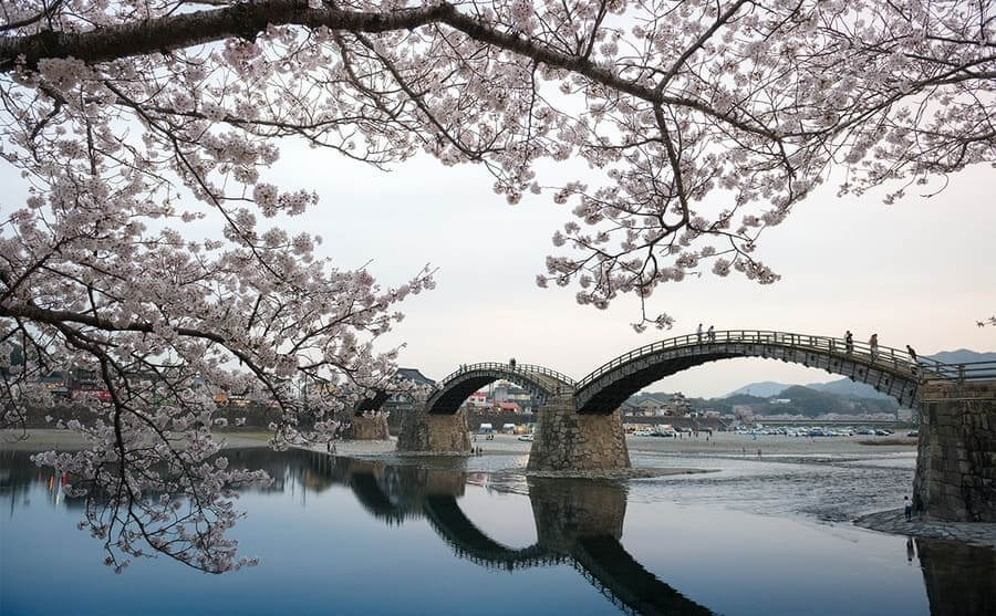Cherry Blossom trees around the bridge with multiple arches