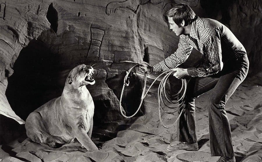 Lee Majors trying to tie a tiger with a rope