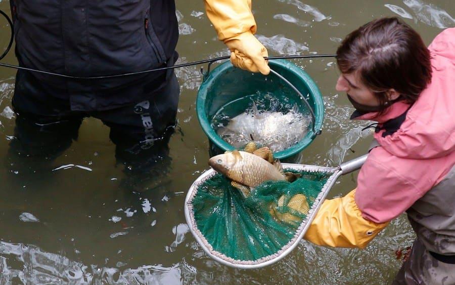 Encontrar peces muertos en el canal de París.