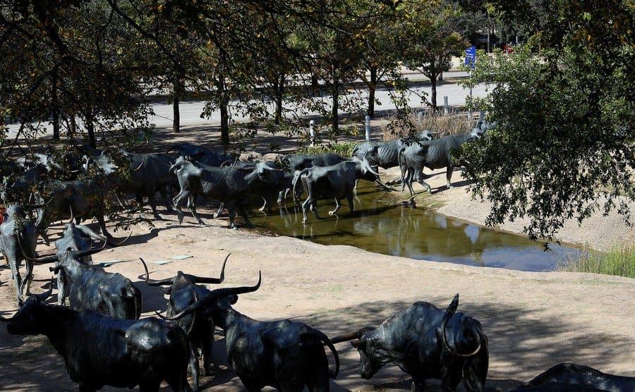 Escultura de un ganado siendo conducido, en Dallas, Texas