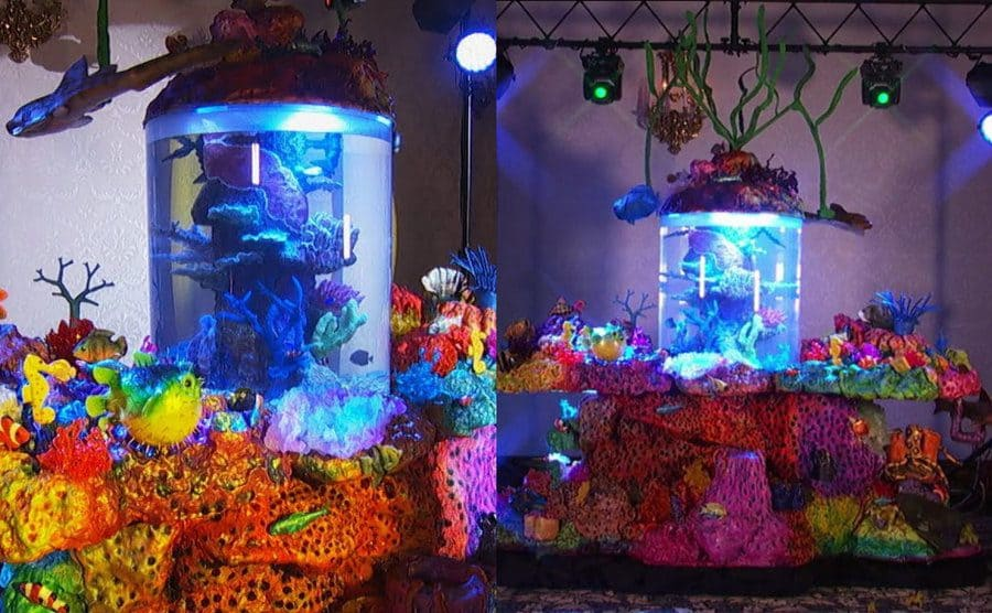 Two close-up photographs of the fish tank