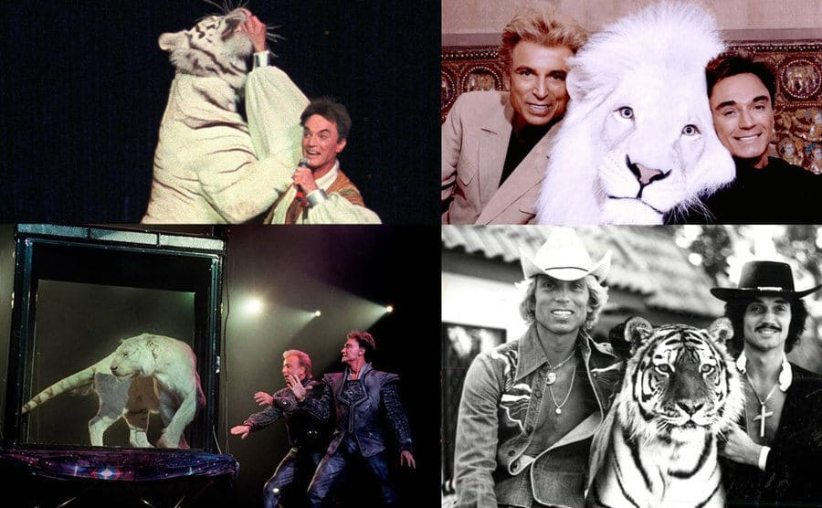 Roy Horn with a tiger / Siegfried and Roy with lion / Siegfried and Roy / Siegfried and Roy
