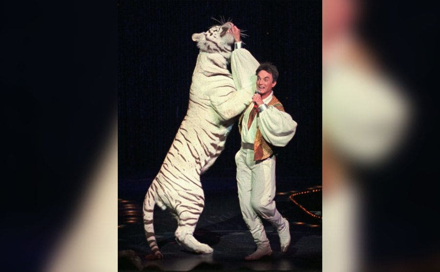 Roy performing on stage with his hand inside a fully grown white tiger.