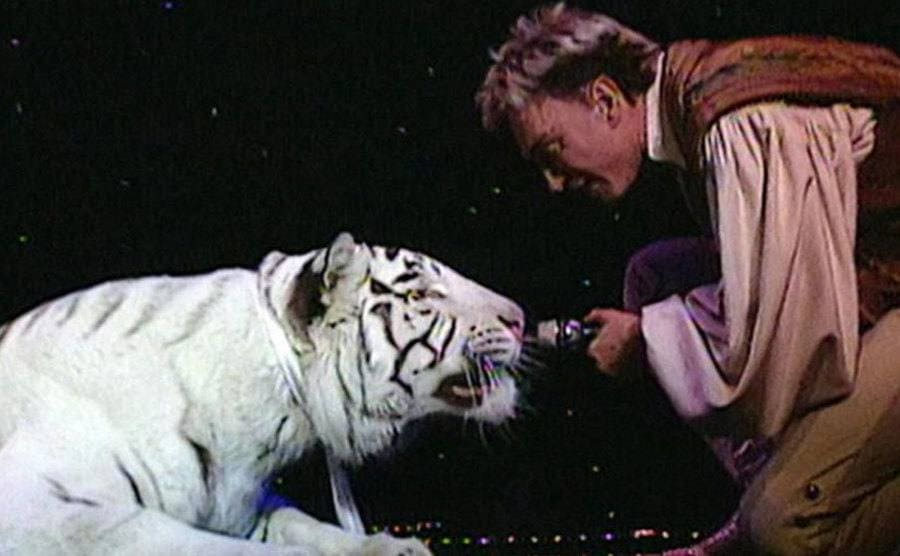 Roy bringing the microphone up close to the tiger's nose on stage.