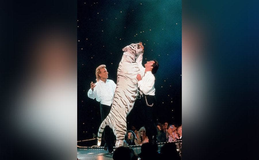 Siegfried and Roy onstage with one of their white tigers standing on its hind legs.
