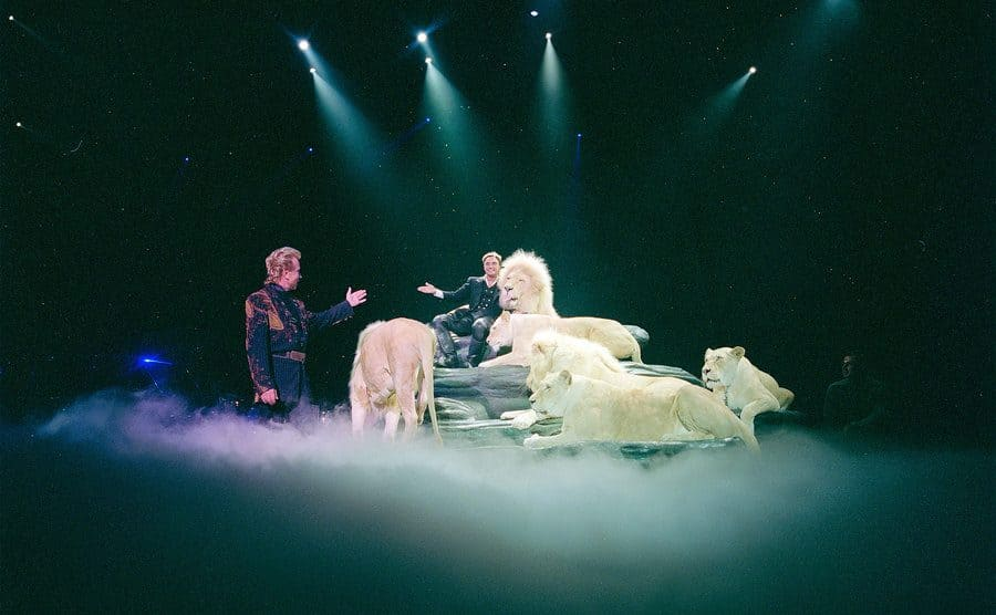 Performance by the illusionists Siegfried Roy prior to Roy nearly fatal mauling by one of the show tigers onstage.