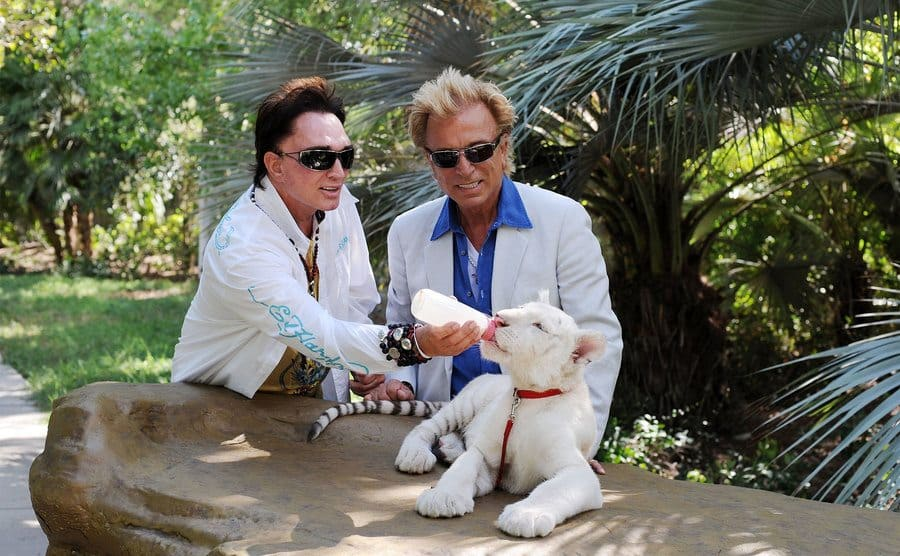 Illusionists Roy Horn and Siegfried Fischbacher feeding their 4 1/2-month-old tiger cubs at Siegfried and Roy's Secret Garden at the Mirage Hotel and Casino
