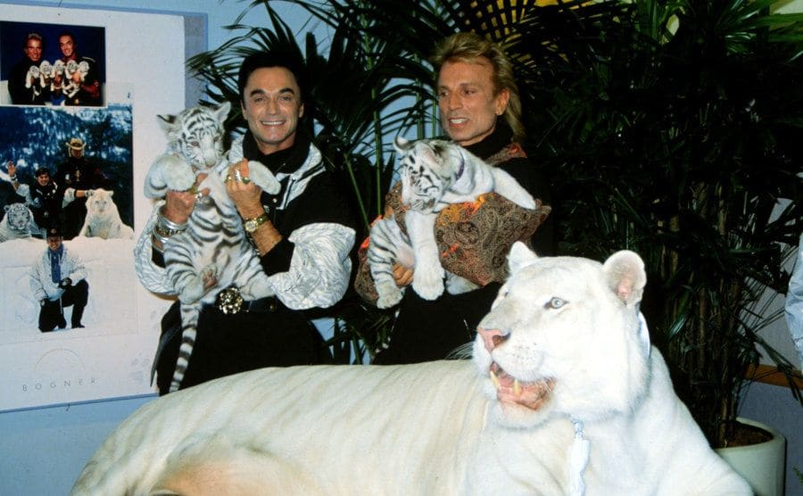 Roy Horn and Siegfried Fischbacher posing with two tiger cubs alongside the tiger's mother.