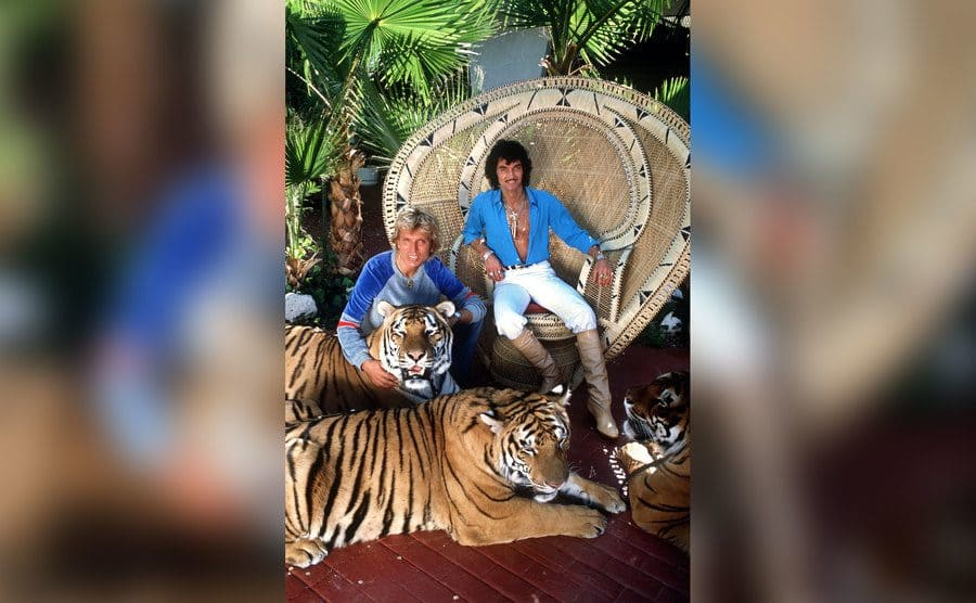 Siegfried and Roy in their back yard surrounded by large tigers.